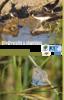 Biodiversité & Chantiers Comment concilier nature et chantiers urbains ? - application/pdf